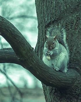 Jacek Wojnarowski - Grey Squirrel in Autumn Park S