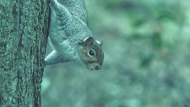 Jacek Wojnarowski - Grey Squirrel in Autumn Park W