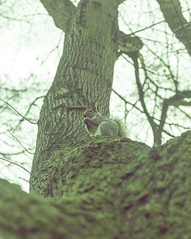 Jacek Wojnarowski - Grey Squirrel in Autumn Park Z