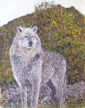 Grey Wolf in the Wilderness by Glenda Crigger