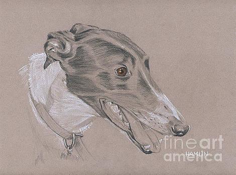 Greyhound - Flashy by Steve Hamlin