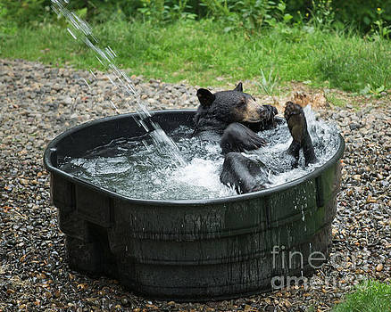Grizzly Bathing by Loriannah Hespe