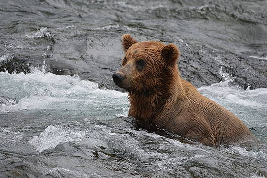 Patricia Twardzik - Grizzly Bear Cub Fishing