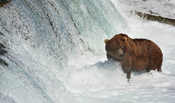Patricia Twardzik - Grizzly Bear at the Falls
