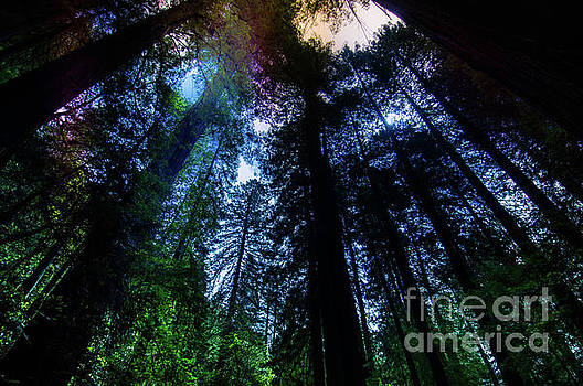 Grizzly Creek Redwood Grove by Blake Webster