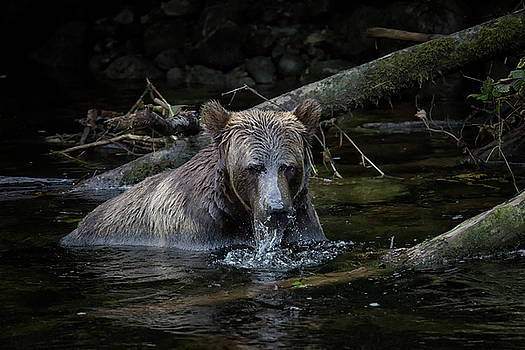 Randy Hall - Grizzly Fishing