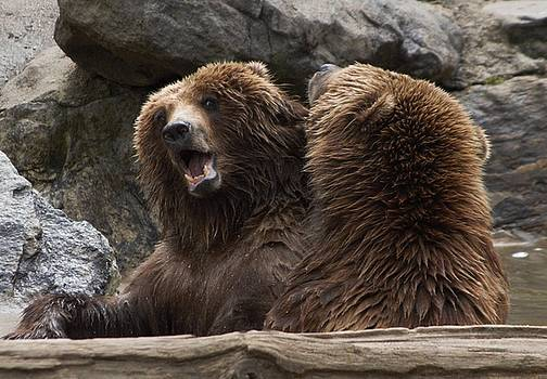 Grizzly Fun by Linda C Johnson