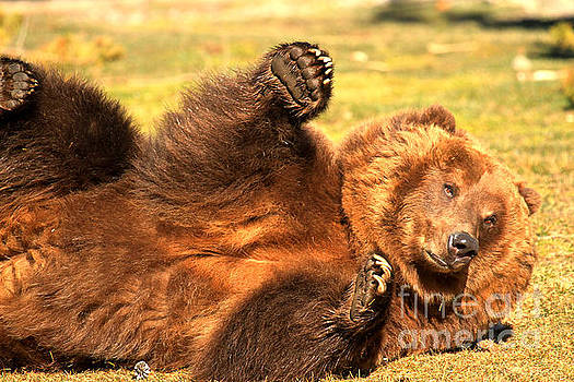 Adam Jewell - Grizzly Roll