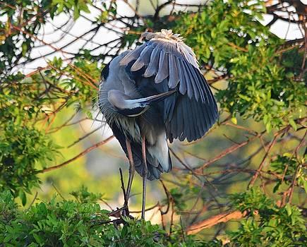 Patricia Twardzik - Grooming Blue Heron