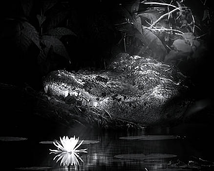 Grotto of the Swamp Gator by Mark Andrew Thomas