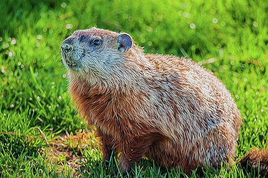 Ground Hog Portrait by Cathy Kovarik