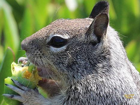 Gary Canant - Ground Squirrel Eating