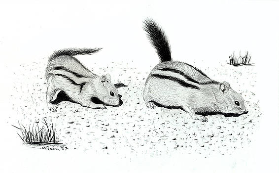 Ground Squirrels by Lynn Quinn