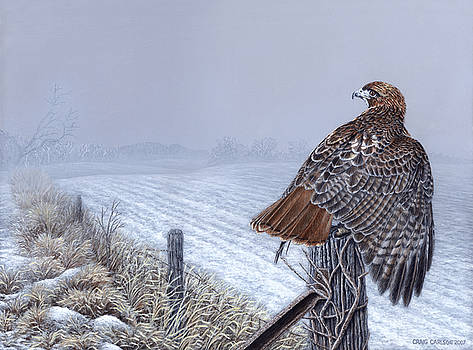 Grounded - Redtailed Hawk by Craig Carlson