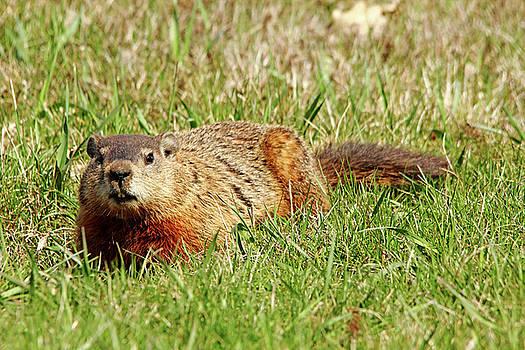 Debbie Oppermann - Groundhog In The Grass
