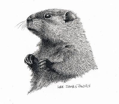 Lee Pantas - Groundhog or Woodchuck