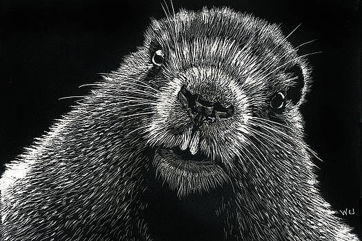 Groundhog by William Underwood