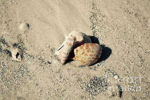 Danielle Groenen - Group of Seashells