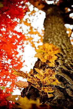 Growing Into Autumn by Matthias Flynn