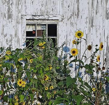 Growing Panes by Stephanie Calhoun
