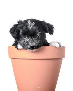 Growing Puppy by Nena Pratt