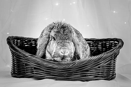 Jeanette Fellows - Grumpy Bunny In A Basket BW