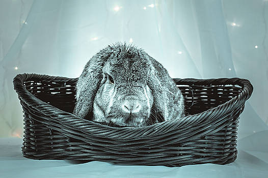 Jeanette Fellows - Grumpy Bunny In A Basket