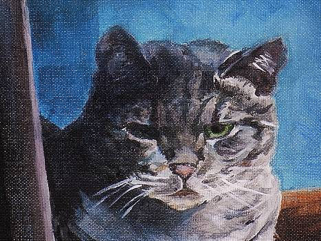 Grumpy kitty by Tara Stephanos