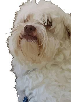 Tracey Harrington-Simpson - Grumpy Terrier Dog Face