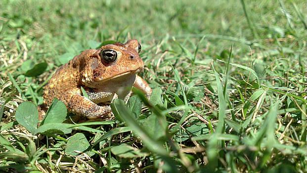 Grumpy Toad by Liza Eckardt