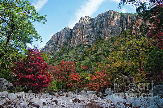 Guadalupe Autumn by Lisa Holmgreen