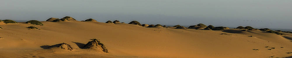 Guadalupe Dunes by L J Oakes
