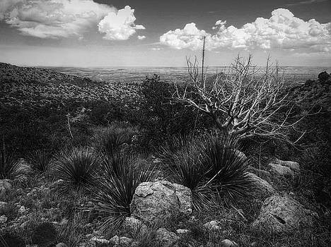 Guadalupe Mountain View by Linda Unger
