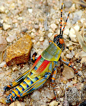 Guady grasshopper by Beth Jacobs