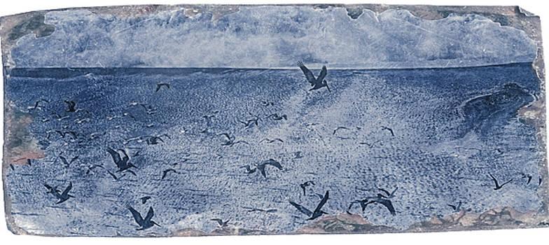 Gualala Birds by Mark Holcomb