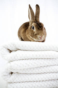 Jeanette Fellows - Guardian of Towels