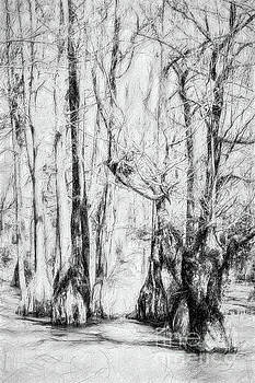 Dan Carmichael - Guardians of the Cypress Swamp AP