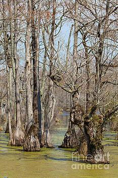 Dan Carmichael - Guardians of the Cypress Swamp