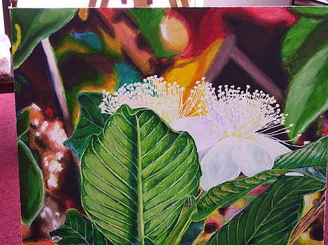 Guava Flower by Jharoam Welz