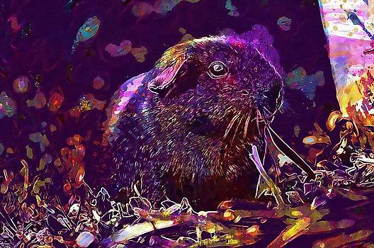 Guinea Pig Animal Rodent  by PixBreak Art