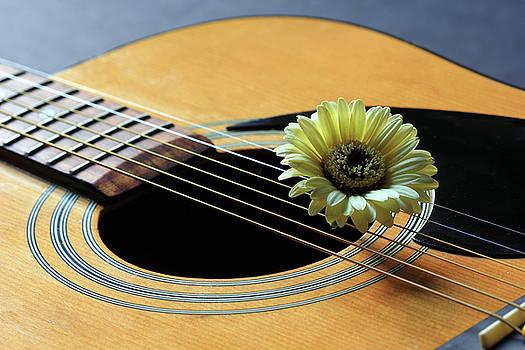Angela Murdock - Guitar and Daisy 2