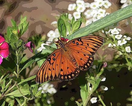 Gulf Fritillary Butterfly by Pamela Rose Hawken