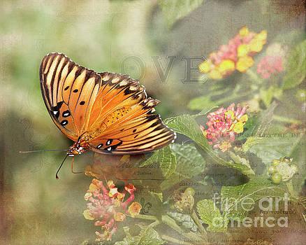 Gulf fritillary butterfly by TN Fairey