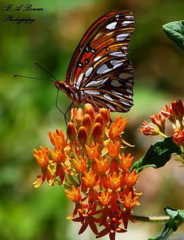 Barbara Bowen - Gulf Fritillary on Butterflyweed