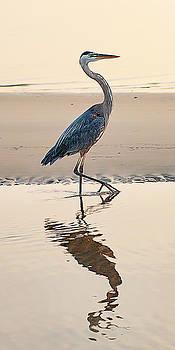 Gulf Port Great Blue Heron by Scott Cordell