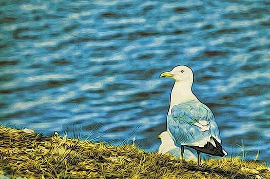 A Baikal gull by Alexandre Ivanov