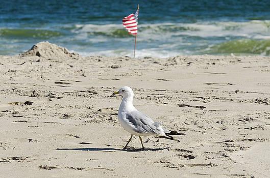 Gull and Flag Rockaway Beach by Maureen E Ritter