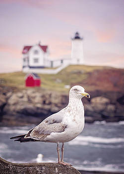 Heather Applegate - Gull at Nubble