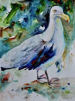 Gull by Beverley Harper Tinsley