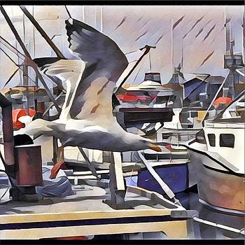 David Matthews - Gull